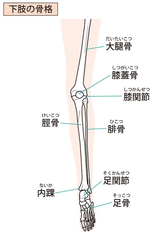当院での足首に対する整体施術